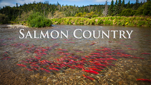 Sockeye Salmon Country Alaska