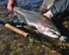 Alaska_Fishing_Lodge_ATA-12.jpg