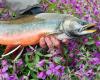 Alaska_Float_Trip_Brightwater_Alaska-19.png