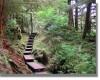 trail_jay_2004_b.jpg