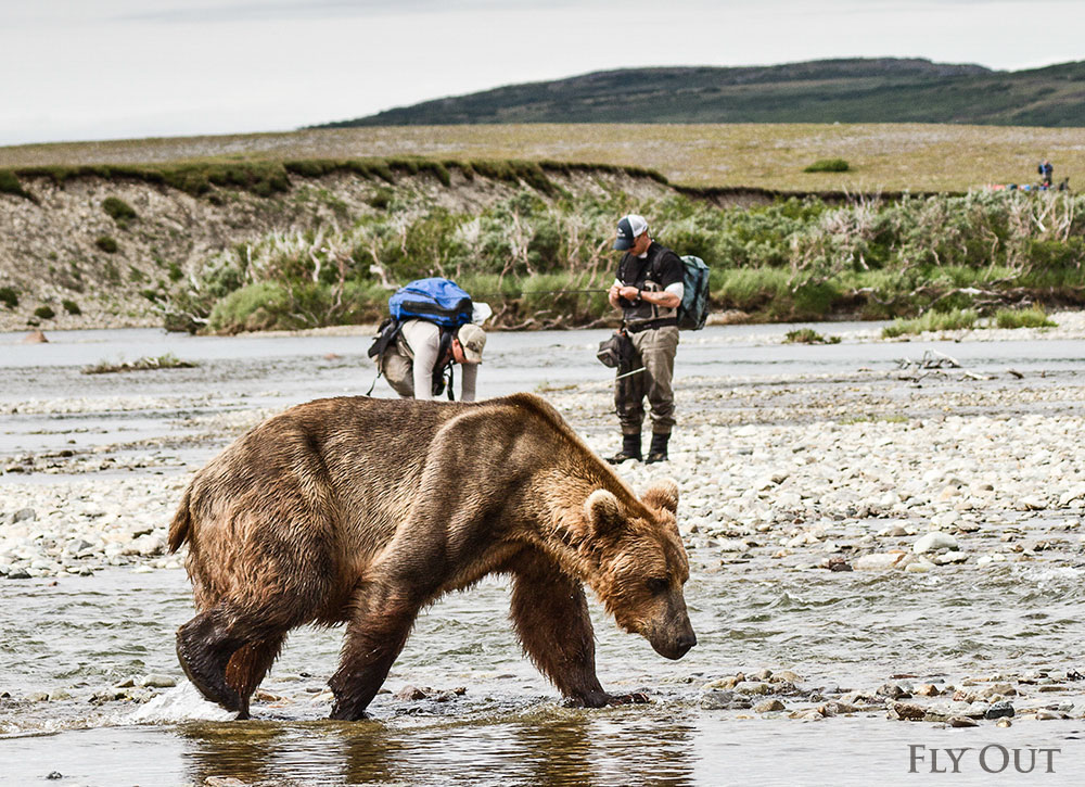 bearsfishing