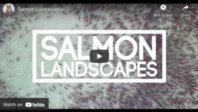 Salmon Landscapes
